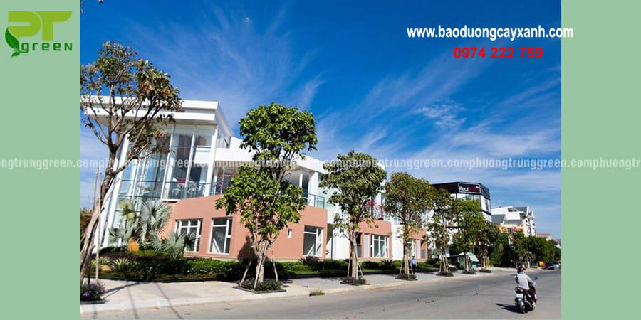 Cây xanh công trình đẹp phổ biến giá rẻ tại P hường Trung Green